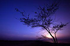 magenta lilac violet lavender plumb- so many shades of purple! Purple Sky, Purple Hues, Shades Of Purple, Lilac, Lavender, Periwinkle, Magenta, Twilight Sky, Beautiful Sky