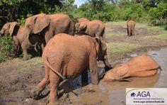 Das Schlammbad dient den kleinen Elefanten zur Hautpflege, denn ihre Haut ist recht empfindlich. Die Schlammschicht schützt die kleinen Dickhäuter vor der Hitze und Sonnenbrand. Aga, Elephant, Animals, Kenya, Wilderness, January, Elephants, Skincare Routine, Animales