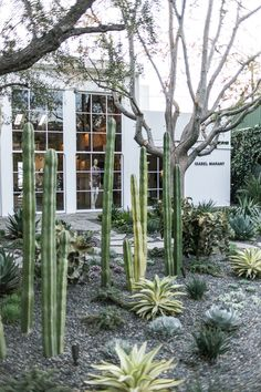 cactus garden outside Isabel Marant in Melrose