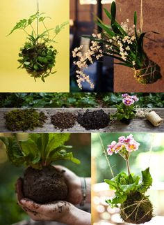 Kokedama string gardens. Beautiful and a great DIY project. For step-by-step guidelines you can just google 'kokedama' or visit here: http://blog.makezine.com/craft/flashback-kokedama-string-garden/