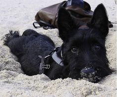 Little Buster at the beach
