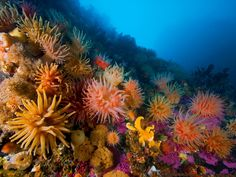 underwater coral photos | coral reef, underwater, ocean, sea anemones - inspiring picture on ...
