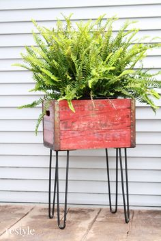 Repurpose a vintage beverage crate into a flower box container garden.
