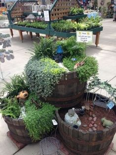 Beautiful fairy garden plants ideas for around your side home 37