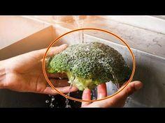 【충격】브로콜리의 의외로 알려지지 않은 씻는 방법 브로콜리의 안은 벌레 투성이【잡학】 - YouTube