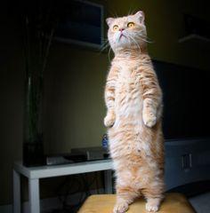 PsBattle: This Stunned Cat