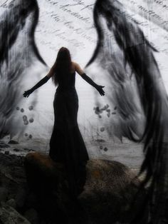 fallen angel wings image picture and wallpaper