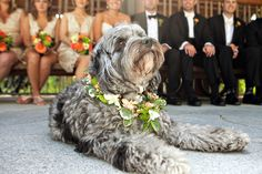 A proud pup taking his ring bearing duties very seriously! {Ameila Soper Photography}