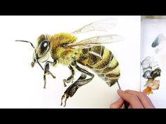How to paint a hairy black & yellow honey bee - Watercolours with WOW