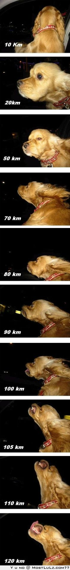 """Dog Speedometer"" - If this is for real then I would like to see the perpetrator flogged. Letting a dog hang out the window going 60mph is dangerous."