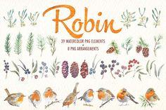 watercolor robin bird clipart - Illustrations - 9
