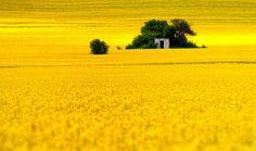 Summer fields near Burgas, Bulgaria. I lived in Bulgaria! Yellow Fields, Fields Of Gold, Places Around The World, Around The Worlds, Beautiful World, Beautiful Places, Vladimir Kush, Thomas Kinkade, Yellow Submarine