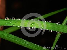 Photo about A close-up view of large and small raindrops after a rain shower on a green blade of grass. Image of small, drop, drops - 149615987