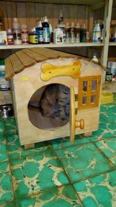 extra velké kočička fotky