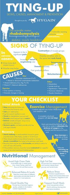 **FREE Fact Sheet for Tying-Up in horses** Are you familiar with the signs of tying-up in horses? Do you know what to do when your horse's hind legs cramp up, he is in paint and he seems to be stuck in one spot? If you answer is no, this free fact sheet on tying-up is not to be missed giving you first-aid strategies to assist your horse straight away.