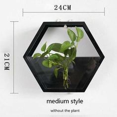 The Modern Hexagon Wall Vase/Fish Tank is one of our most prized products. Acting as both a wall vase for your latest foliage or a table fish tank, the use is endless. Modern Hexagon Wall Vase/Fish Tank, Black S