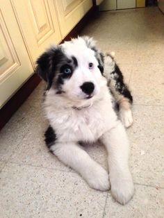 Desja. 10 weeks old