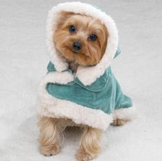 Cute doggy ready to brave the winter!