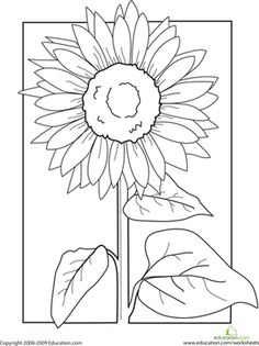 First Grade Nature Worksheets: Color the Sunflower!