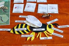 Learning about bees - Interest led learning. Hands-on, Montessori inspired activity ideas for learning about bees Felt honeybee template Science Fair Projects, Science Lessons, School Projects, Montessori, Bee Crafts For Kids, Bee Activities, Science Curriculum, Hands On Learning, Project Based Learning
