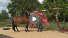 Vorbereitende Übungen für das Verladen Horses, Animals, Horseback Riding, Animales, Animaux, Animal, Animais, Horse