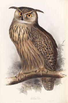 Eagle Owl: Edward Lear