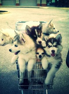 basket full of puppies!