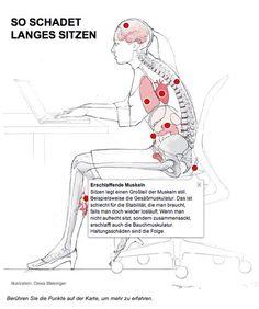 Anatomie Mensch, innere Organe Frau und Mann, Ansicht