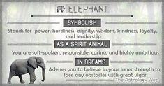 What do elephants symbolize, as a spirit animal (totem animal), white elephant meaning, significance of dreams about elephants Elephant Spirit Animal, Elephant Quotes, Spirit Animal Totem, Animal Spirit Guides, Elephant Love, Animal Totems, Elephant Artwork, Small Elephant, Elephant Symbolism