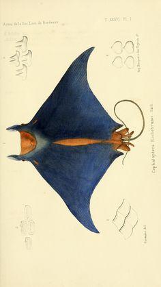 Poissons (1883) - Faune de la Sénégambie / - Biodiversity Heritage Library
