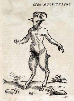 Aegopithecus
