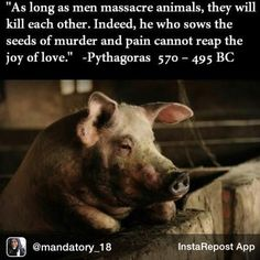 If you can't go vegan (yet) at least buy meat that isn't factory farmed.  You'll have peace of mind knowing your food didn't live a tortured life, leading up to a horrendous death.  If you can go vegan, great -- because food shouldn't scream.