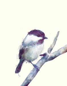 Quel merveilleux petit oiseau. Si on est patient, il vient même manger dans notre main.Brave et si belle petite mésange. viens parer mon sapin, il a l'air triste sans toi !