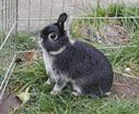 Rabbits don't belong in a classroom.