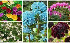 plante perene de gradina Dream Garden, Home And Garden, Fruit, Creative, Plants, Orice, Minden, Gardening, Garden Ideas