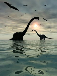 Title:Diplodocus Dinosaurs Bathe In A Large    Artist:Mark Stevenson    Medium: Digital Art - Illustration    Description:    Giant sauropod Diplodocus dinosaurs relax at the end of a long hot day by bathing in the nearest body of water.