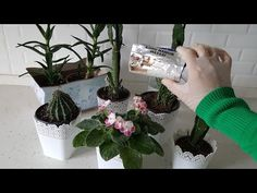DENEME REKORU KIRAN UYGULAMA İLE COŞMAYAN ÇİÇEK KALMADI KURU MAYA TARİFİ huri metekmutfakta - YouTube Garden Plants, House Plants, Growing Plants, Hydroponics, Ikebana, Valentines, Blog, Dry Flowers, Aspirin