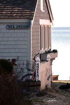 Sea Urchin / Provincetown / David Fuller Photo
