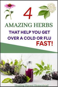 Here are easy home remedies and herbs you can use to help fight off the cold and flu. Get rid of those pesky symptoms like cough, sore throat, and build your immune system at the same time. #cold #flu #getridof #homeremedy #homeremedies #immuneboosting #immune #immunity #healingharvesthomestead Herbs For Health, Healthy Herbs, Health Tips, Health And Wellness, Natural Health Remedies, Natural Cures, Herbal Remedies, Home Remedies, Herbal Tinctures