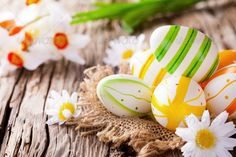 Easter colored eggs on wood ...  abundance, background, blossom, blue, board, brown, celebration, colored, colorfull, country, daisy, decoration, easter, eco, ecology, egg, flower, food, gap, holiday, horizonatl, horizontal, joy, lifestyle, natural, nature, nest, old, plank, raw, religion, rough, rural, rustic, shell, space, splinter, spring, springtime, traditional, white, wood, wooden
