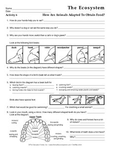 Ecosystem Worksheets for Kids the Ecosystem Lesson Plans the Mailbox Math Practice Worksheets, Science Worksheets, Teacher Worksheets, Science Lessons, Life Science, Science Demonstrations, Animal Worksheets, Science Topics, 7th Grade Science