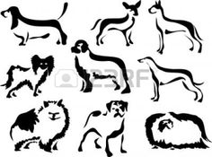 242121-dog-breeds.jpg (1200×894)