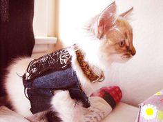 Excited to take the finished vest out on its first run. | Look At These 19 Adorable Cats In Punk Vests