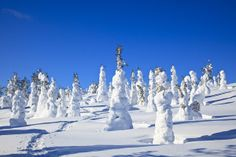 Lapland, Finland snow covered trees