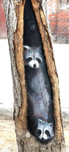 Noooo, these aren't raccoons.  This is street art by Wang Yue, dubbed Barksy by the press, whose work can be found in Shijiazhuang, Hebei, China.
