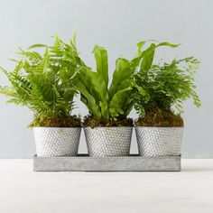 #TheLIST: Spring Cleaning Southern Greens, Potted Ferns, Low Light Plants, Grow Kit, Low Lights, Spring Cleaning, Flower Vases, Houseplants, Container Gardening