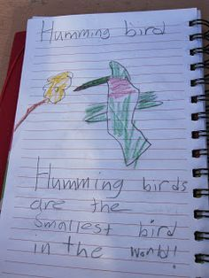 Fun activity for kids who like birds: Make your own bird book!