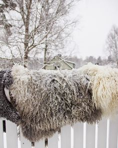 De rijp staat op deze mooie wollen vachten.