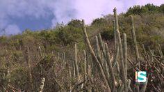 GeoAmbiente - Bosque Seco de Guánica: Bajo fuego  (1/3)