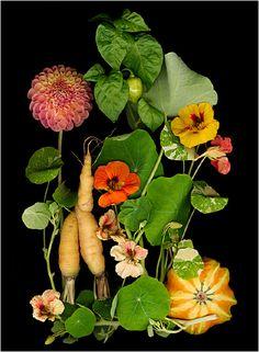Page Organic Gardening Scans By Ellen Hoverkamp - Scanner Photography By… Organic Gardening Tips, Garden Trellis, Plant Needs, Organic Vegetables, Botanical Prints, Horticulture, Vegetable Garden, Beautiful Gardens, Container Gardening